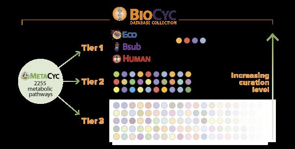 BioCyc_curation_level